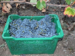 A full case of grapes