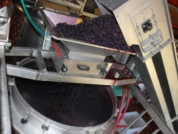 Overflowing with grapes
